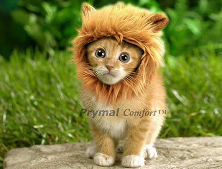 Prymal Lion Mane Dog Cat Costume. This Pet Costume Turns Your Cat or Small Dog Into a Ferocious Lion King! (Please be aware of fake products from other sellers). Clothing for cats.